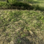 Status of the garden, May 30, 2016